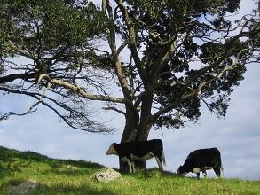 ニュージーランド産のミルクIgGを原料としたサプリメントです。
