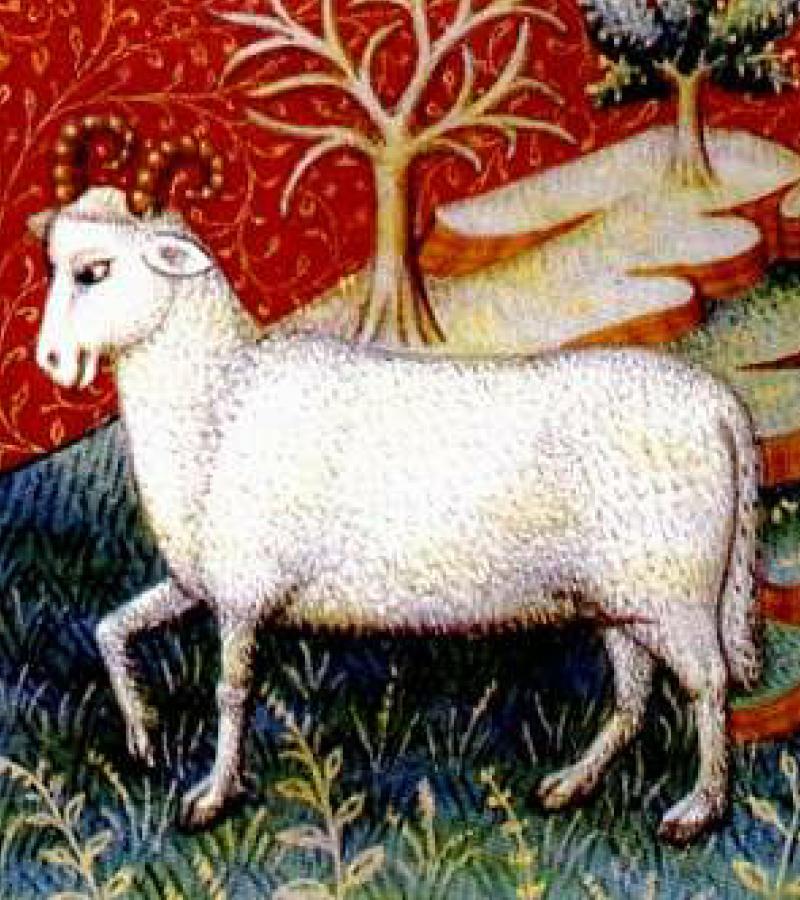 『本經逢原』では羊の胎盤が紹介されています。