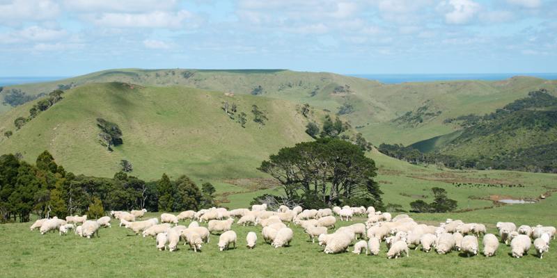 セレブリティーハナプラセンタは、ニュージーランドの羊プラセンタを使用しています。