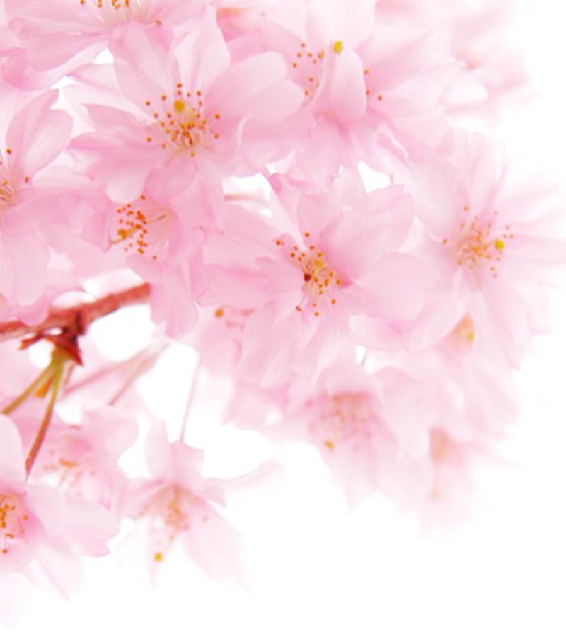 セレブリティーハナプラセンタには、サクラの花エキスも配合されています。